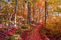 Weg im Holz Lizenzfreies Stockfoto