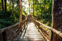 Weg im Holz, chiangmai Thailand Stockfotografie