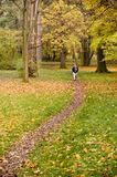 Weg im Park Stockbilder