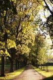 Weg im Park Stockbild