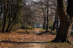 Weg im Park stockfotos