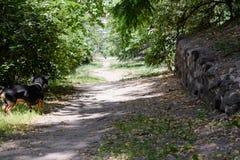 Weg im Park im Sommer mit Hund in der Stadt Lizenzfreie Stockfotos