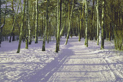 Weg im Park im Winter Lizenzfreie Stockbilder