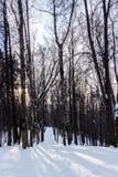Weg im Park im Winter bei Sonnenuntergang Stockbild