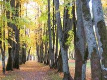 Weg im Park und in den alten Herbstbäumen, Litauen Stockbild