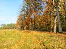 Weg im Park und in den alten Herbstbäumen, Litauen Lizenzfreies Stockfoto