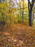 Weg im Park und in den bunten Herbstbäumen, Litauen Stockfotografie