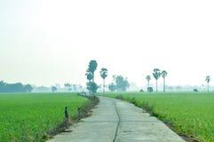 Weg im Reisfeld mit Arengapalmebaum im Nebel Lizenzfreie Stockbilder