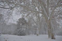 Weg im Schnee mit Bank und Bäumen Lizenzfreies Stockfoto