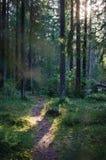 Weg im schwedischen Wald durch Sonnenuntergang Stockfoto