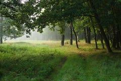 Weg im Sommerwald Stockfoto