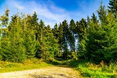 Weg im Wald stockfotografie