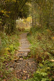Weg im Wald Stockbilder