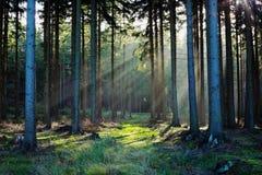 Weg im Wald Stockfotos