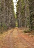 Weg im Wald Lizenzfreies Stockfoto