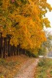Weg im Wald Lizenzfreie Stockbilder
