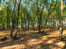 Weg im Wald Lizenzfreies Stockbild