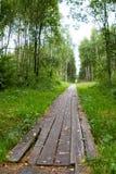 Weg im Wald gezeichnet mit Brettern Stockfotografie