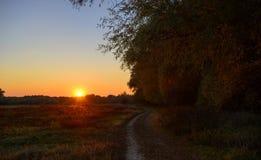 Weg im Wald im Herbst und in den Bäumen Lizenzfreie Stockfotografie