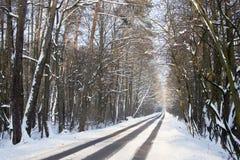 Weg im Wald im Winter Stockbild