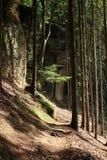 Weg im Wald mit Sandsteinklippen Stockfotos