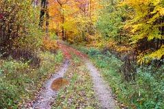 Weg im Wald nach dem Regen Lizenzfreie Stockfotos