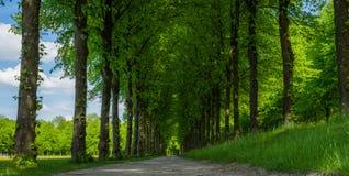 Weg im Wald am sonnigen Tag lizenzfreies stockfoto