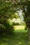 Weg im Wald unter den Bäumen Tür zum geheimen Garten Stockfotos
