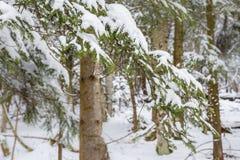 Weg im Wald im Winter, Siebenbürgen, Rumänien lizenzfreies stockbild