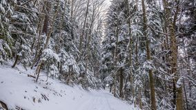 Weg im Wald im Winter, Siebenbürgen, Rumänien lizenzfreie stockfotos