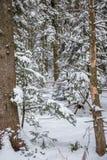 Weg im Wald im Winter, Siebenbürgen, Rumänien stockfoto