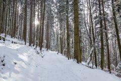 Weg im Wald im Winter, Siebenbürgen, Rumänien stockfotos