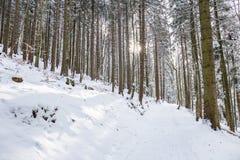Weg im Wald im Winter, Siebenbürgen, Rumänien stockbild