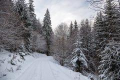 Weg im Wald im Winter, Siebenbürgen, Rumänien lizenzfreies stockfoto
