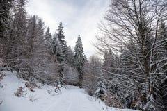 Weg im Wald im Winter, Siebenbürgen, Rumänien stockfotografie