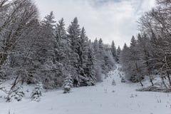 Weg im Wald im Winter, Siebenbürgen, Rumänien lizenzfreie stockfotografie