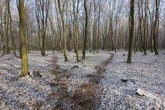 Weg im weißen Schnee durch Winterwald Stockfotos