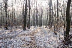 Weg im weißen Schnee durch Winterwald Stockbilder