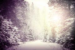 Weg im Winter-Wald Stockbild