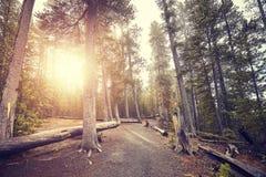 Weg im Yellowstone Nationalpark Wald bei Sonnenuntergang, USA Lizenzfreie Stockbilder