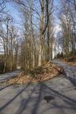 Weg - Kronkelweg in een bos Royalty-vrije Stock Afbeelding