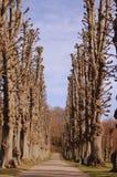 Weg langs bomen Royalty-vrije Stock Fotografie
