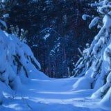 Weg langs de geheimzinnige steeg die in het donkere de winterbos leiden Stock Foto