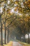 Weg met bomen Royalty-vrije Stock Afbeelding