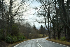 Weg met bomen Royalty-vrije Stock Foto