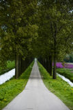 Weg met bomen royalty-vrije stock foto's