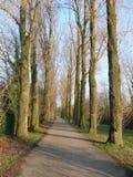 Weg met bomen in de herfst royalty-vrije stock fotografie