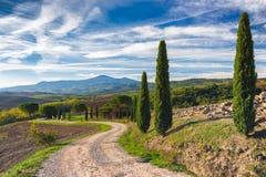 Weg met cipresbomen in Toscanië Royalty-vrije Stock Afbeeldingen