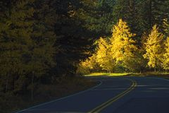 Weg met dalings gele bomen Stock Fotografie