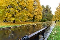 Weg met dalingsgebladerte en gele bomen royalty-vrije stock fotografie
